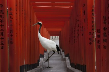 Karen Knorr: animals and culture