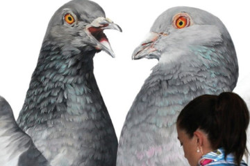 Giant hyper-realistic pigeons by Adele Renault