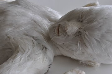 The feathered children by Lucy Glendinning