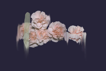 Simone Truong's flowers