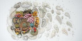 Ceramic corals by Courtney Mattison
